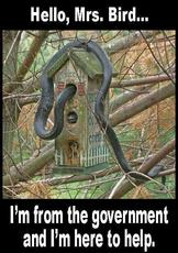Hello Mrs Bird I'm from the government