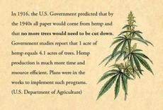 The government predicted all paper would come from hemp